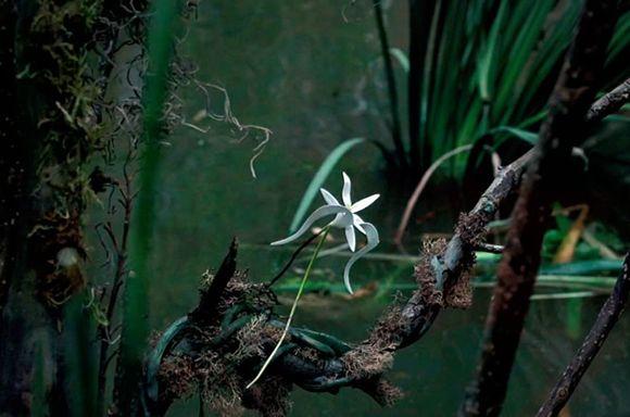 Imagen de Adaptation (El ladron de orquideas) 3
